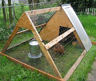 A frame chicken tractor