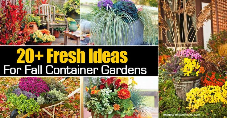 The Fall Garden Ideas: Do You Have A Check List Of Fall Gardening?