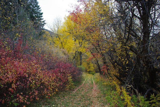 Photos of fall colors in Provo Canyon, Utah.