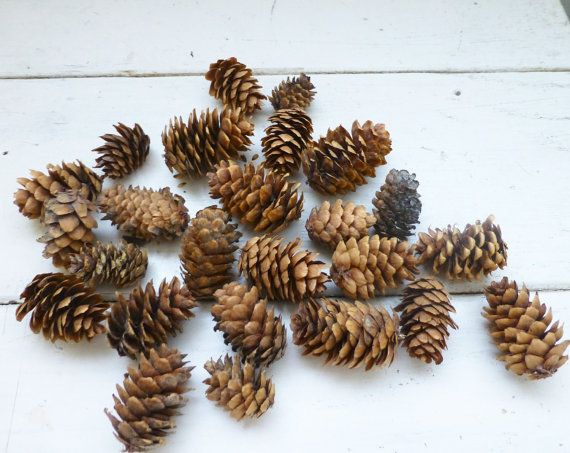 Pine cones for crafts, pine cones for sale, tiny pine cones, rustic pine cones, fall table, small pine cones, pine cones, all natural