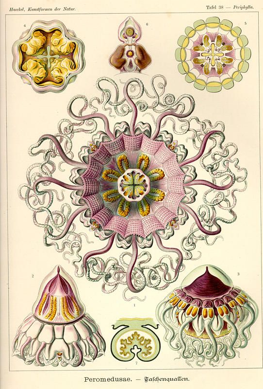Ernst Haeckel; the colours and patterns in nature are spectacular, and inspire so many beautiful things that humans create!