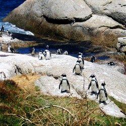 Family-Friendly Cape Town: Family fun in Cape Town