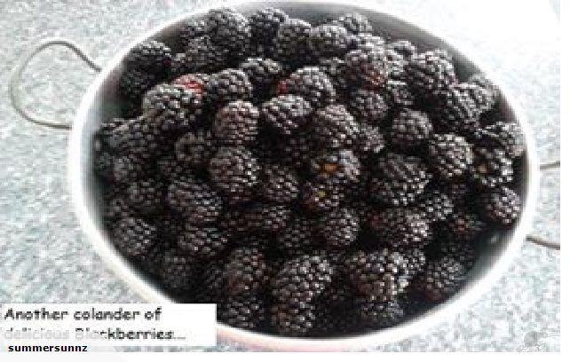 Thornless Blackberries.. delicious..