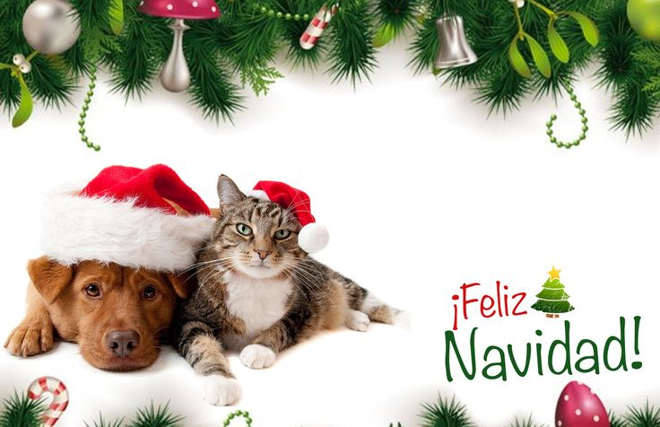 #Tarjeta de #Navidad de #Perros y #Gatos #kitty #kittycat #dog #doggie #purina #whiskas #christmas #cards #free #greetings #greetingsfree http://bit.ly/11c95L3