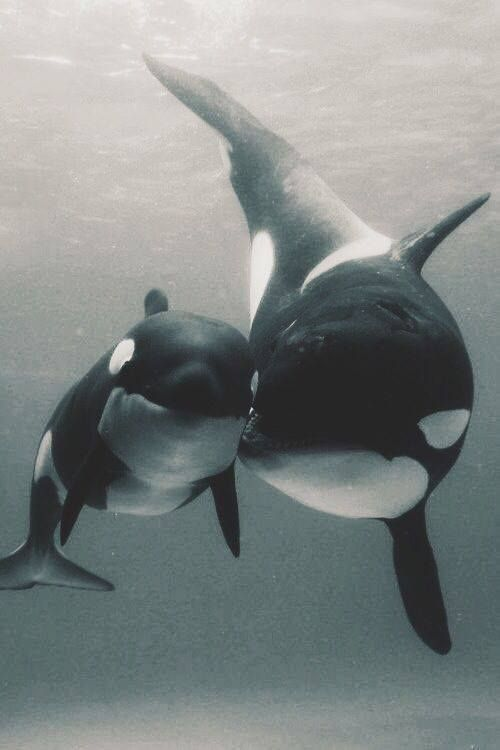 I wish we could all just leave these beautiful beings alone <3 <3