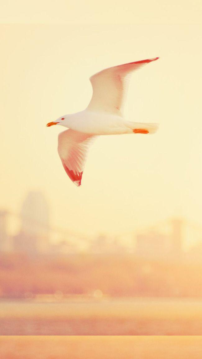 طائر النورس من السماء رحلة الخلفية Animals Bird Background