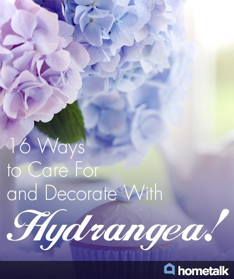 16 Ways to Care For and Decorate With Hydrangea!