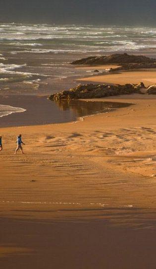 Tarkine Trails - Walks in the Tarkine -