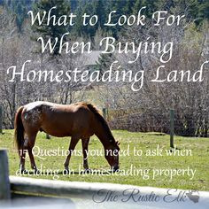 What to Look for When Buying Homesteading Land