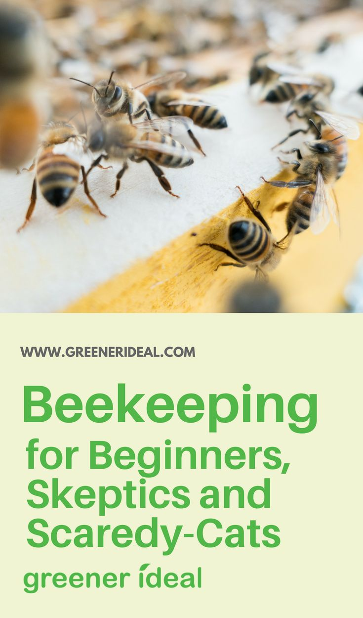 With fewer bees to pollinate fruits and vegetables each year, 'beemageddon' may soon cause the collapse of the agriculture industry. –My Science Academy. Help dissuade Beemageddon!