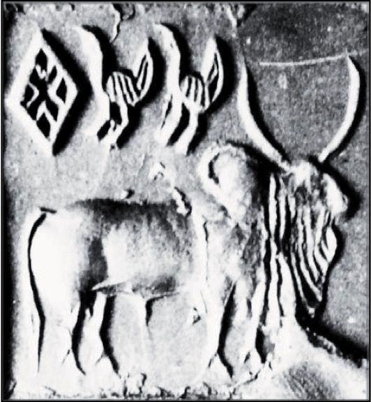 Image result for zebu black drongo