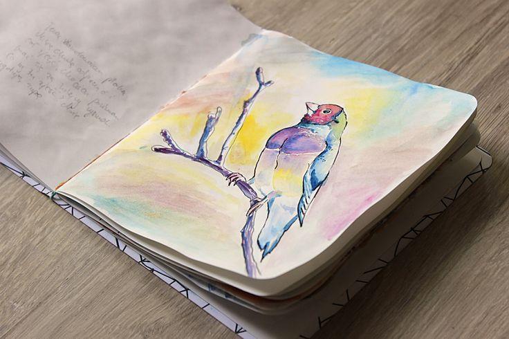 watercolor illustration bird