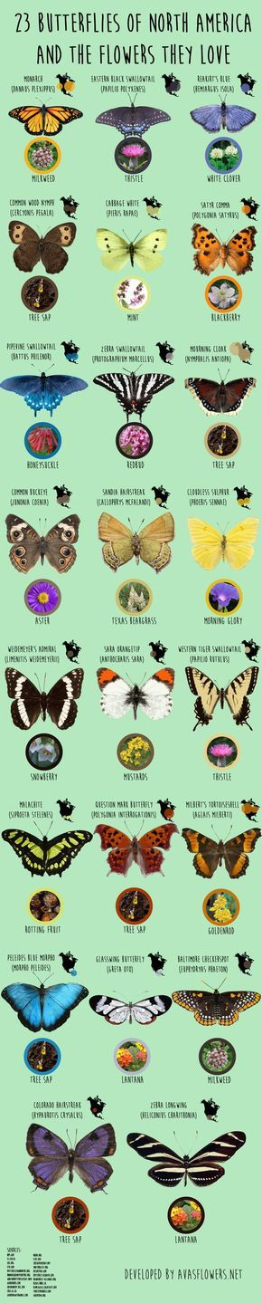 """Have you ever wondered, """"What do butterflies eat?"""" Have you ever been curious about which local butterflies you can find in your own backyard?"""
