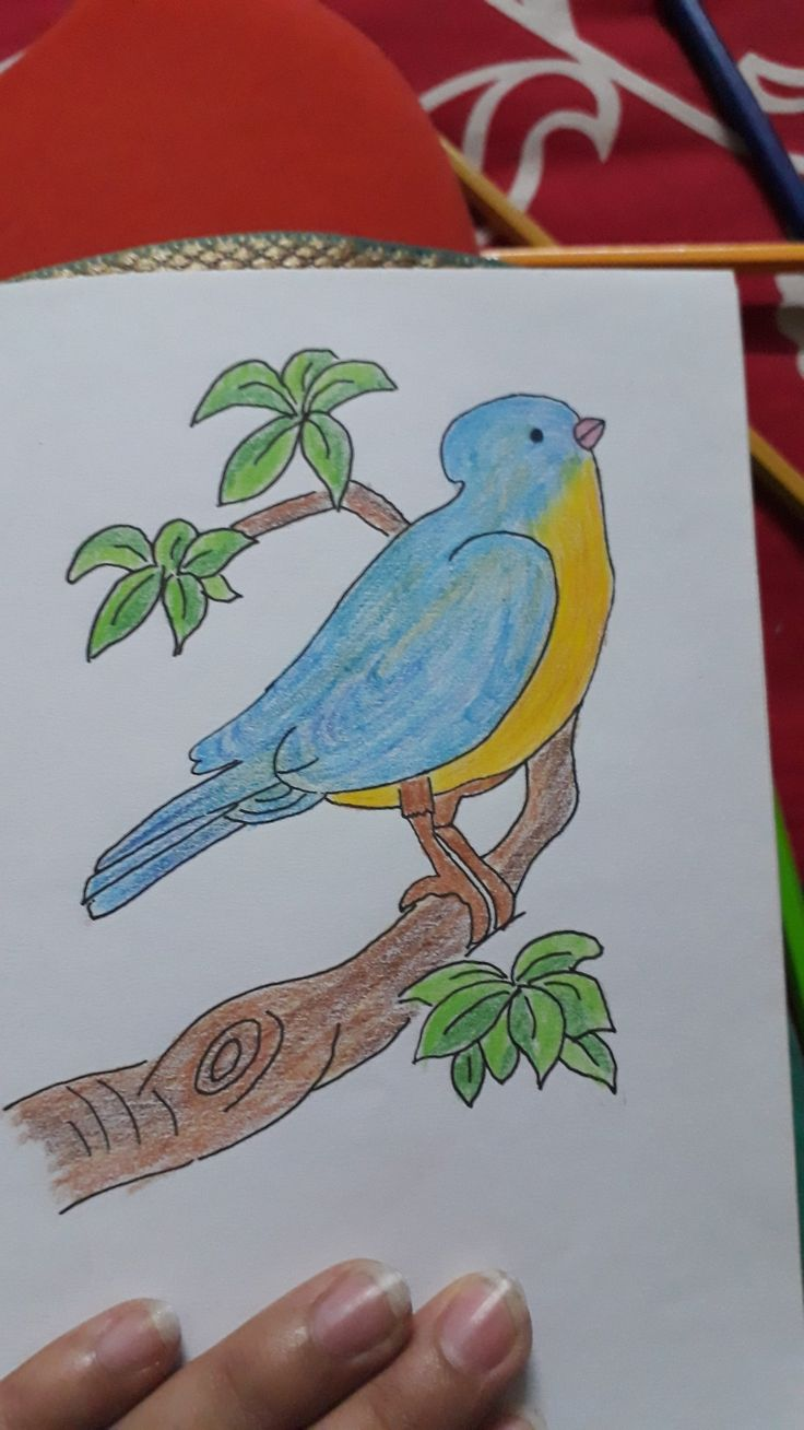 Pin By Kanchi Paliwal On Drawings Art Drawings For Kids