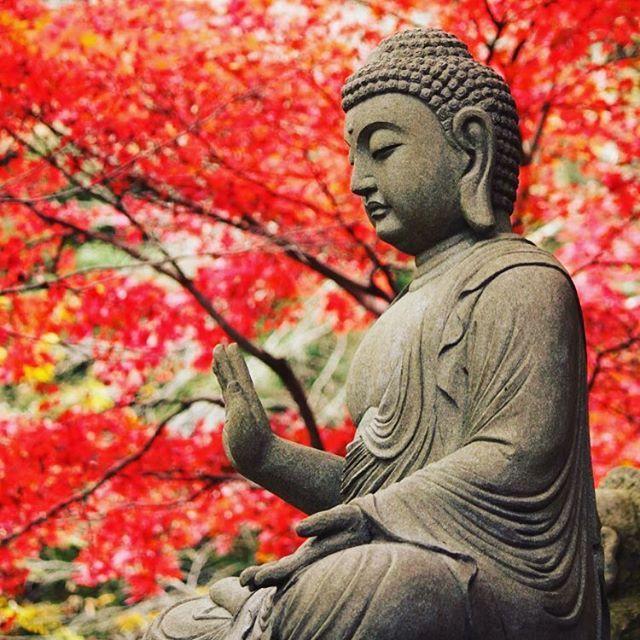 Wish you all a successful week! // Mindenkinek sikeres hetet kívánunk! #szegedbudokan #martialarts #academy #szeged #budokan #harcművészet #japan #japanese #buddha #belief #peace #harmony #balance #warrior #samurai #spirit #garden #travel #throwback #picoftheday #mylife #lovewhatyoudo #kyoto #autumn