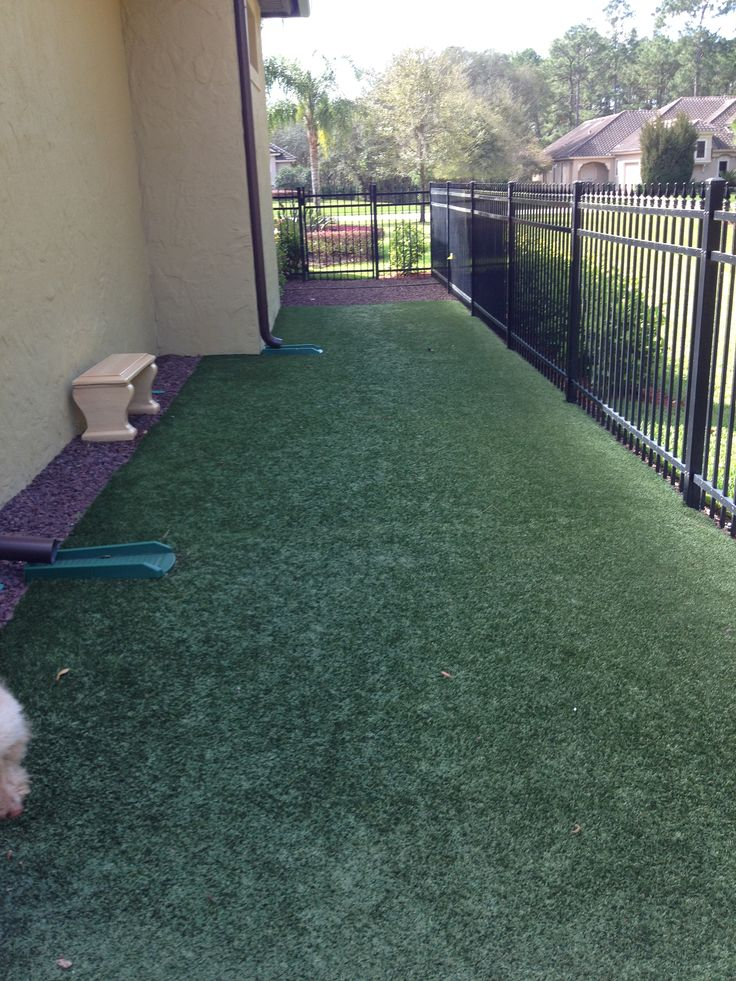Doodles artificial turf potty area ;-)