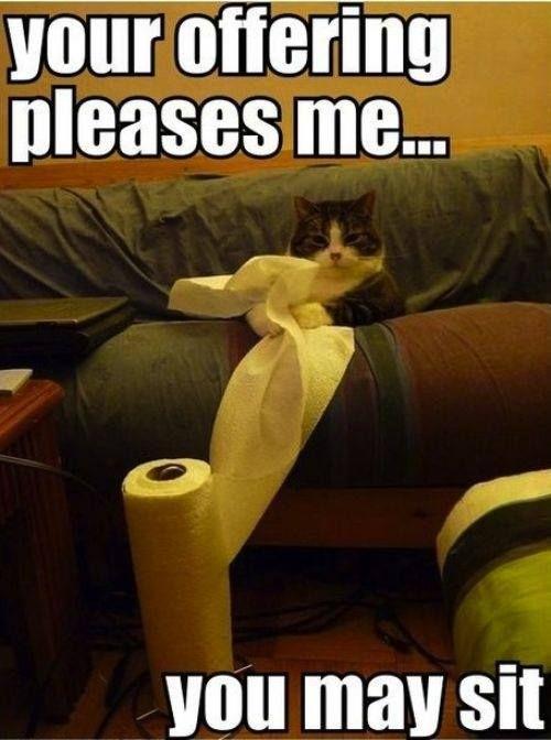 Cat Towel Animal
