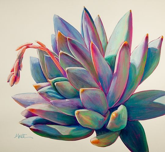 """Sunburst"" - Acrylic on Paper, Succulent Paintings www.athenamantle.com"