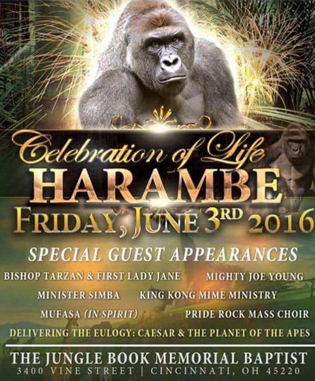 Die besten 25+ Harambe the gorilla Ideen auf Pinterest Baby - bodenbelag f r k che