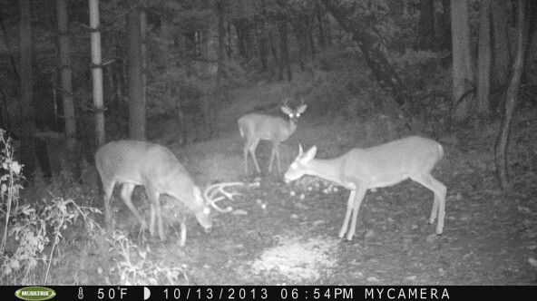 67 Best Images About Bucks Gone Wild On Pinterest
