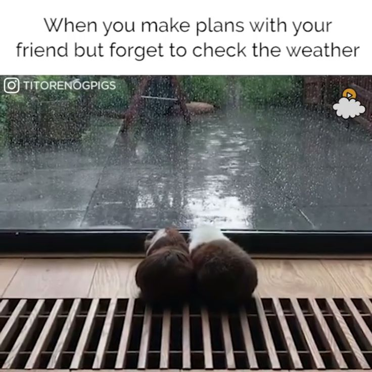 Funny Quotes Rainy Day: Ruins, Sarcastic Humor, Funny
