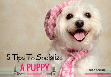 puppy socialization, how to socialize a puppy, puppy socialize, dog behavior training, puppy behavior training, puppy training tips, puppy socialization classes, dog barking, dog fear, puppy scared, confident and happy dog