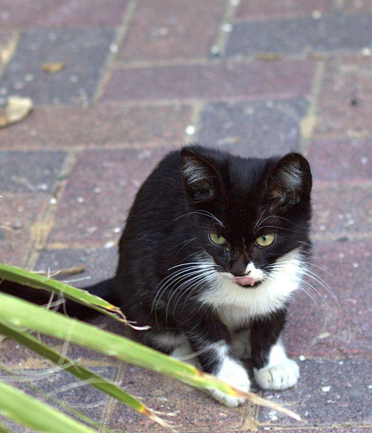 A kitten in Holon,December 16