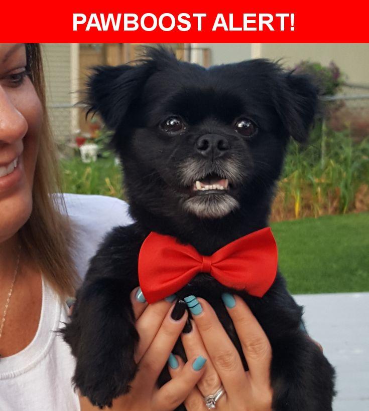 Please spread the word! Scout was last seen in , MI 48624.    Nearest Address: Lake secord gladwin Michigan
