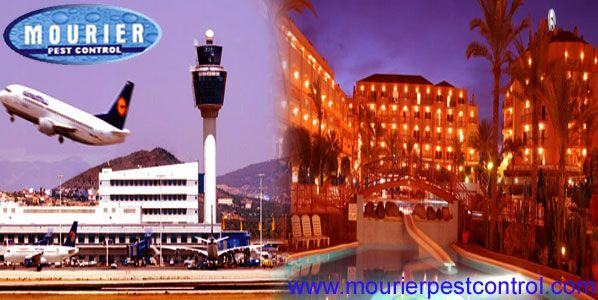 Call @ 99997875871. Mourier pest control offers pest control for hotels and pest control for Airport. We provide cockroach, termite control and other pest management services under the objective of pest control for Airport and Hotels.
