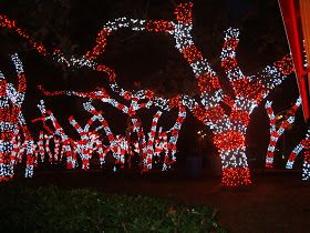 candy cane Christmas tree lights