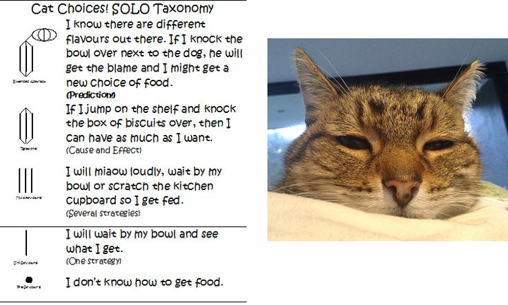 "Pam Hook on Twitter: ""Waikowhai School candidate for cats of #SOLOTaxonomy @Pinterest has own rubric http://t.co/gpGhqID7YE #solotaxcats http://t.co/gE2TLZFwI3"""