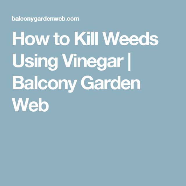 How to Kill Weeds Using Vinegar | Balcony Garden Web