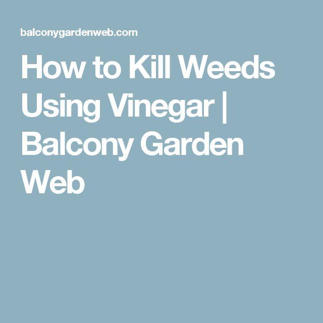 How to Kill Weeds Using Vinegar | Balcony Garden Web