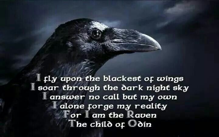 Raven is the fatal touch of the Calleach in winter, the wisdom of Odin, the vessel of prophecy given to a seer, the mighty protector of the Western Isles, and the healing message of an Indian shaman. Raven is a complex bird, both in nature and in mythology.