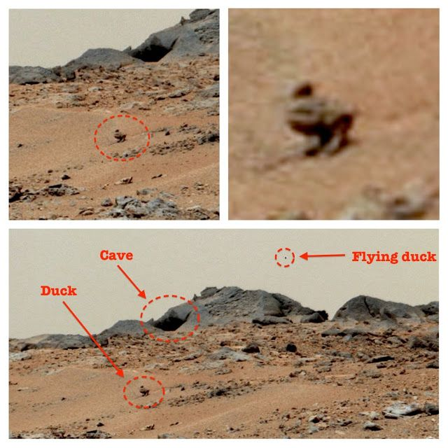 On Mars Two Duck Like Creatures Found By Curiosity Rover, Video   This duck-like creature was discovered in a NASA Curiosity rover photo this week and near the duck we see a cave, which may give it shelter reports  Scott C Waring at UFO Sightings Daily. Also we know this creature flies because there is another one in the far distance behind the cave in the sky.