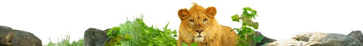 Calendar of Events :: Saint Louis Zoo JAMMIN at tHE ZOO Wed, July 23 6-10pm