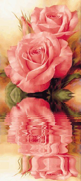 Анимация. Красивые розы...