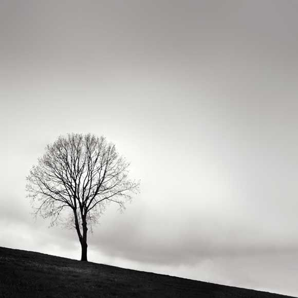 1000 images about minimalist on pinterest trees for Art minimal facebook