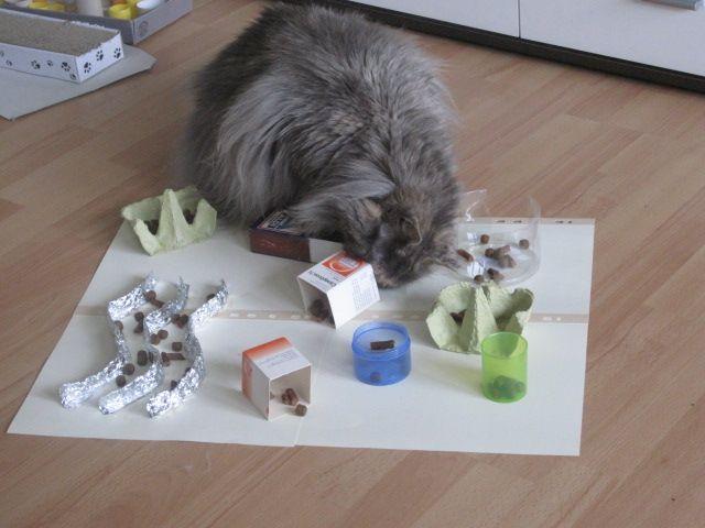 17 best images about katzen futter station on pinterest cats maze and basteln. Black Bedroom Furniture Sets. Home Design Ideas