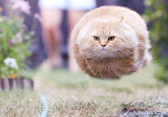 This picture was taken just before Hoverball Cat took off at supersonic speed. It sounded like a whistle and a scream and the ground caught fire.