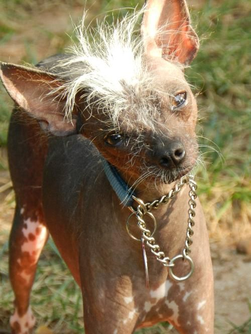 Bald Is Beautiful Dog Rescue