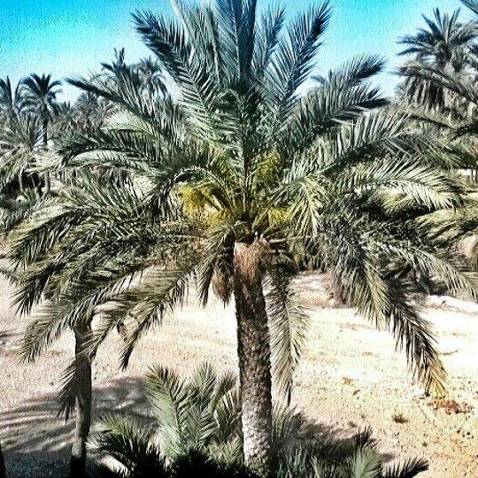 En el Oasis.  Elche (Alicante España)