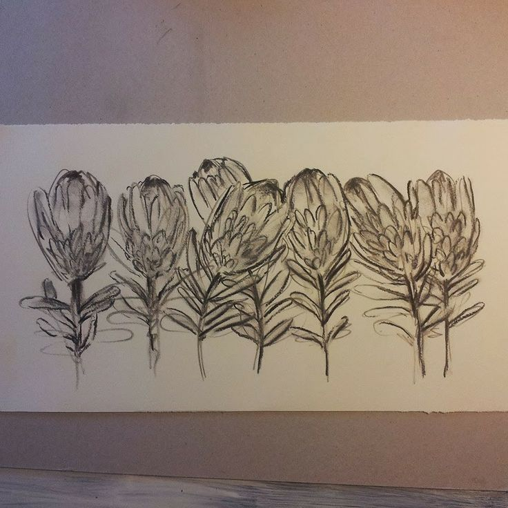Charcoal on paper. Pink ice proteas. Melissa Von Brughan Art