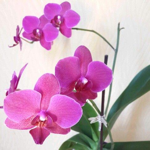 Зима - самый богатый на цветение орхидей период