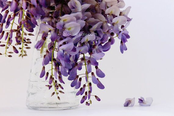 Wisteria in a vase - home decor - lilac, purple flower photo, still life photography - flower blooms on Etsy, $13.00