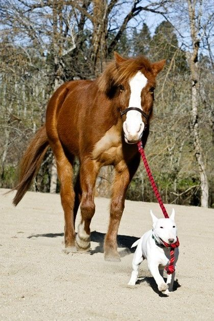 Hund und Pferd  8 x 10 Print von MarkJAsher auf Etsy