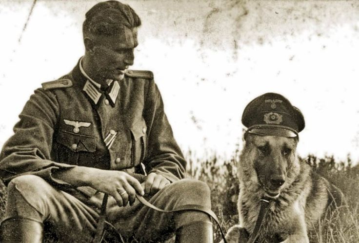 WW2 German army and animals - Page 2 - Stormfront