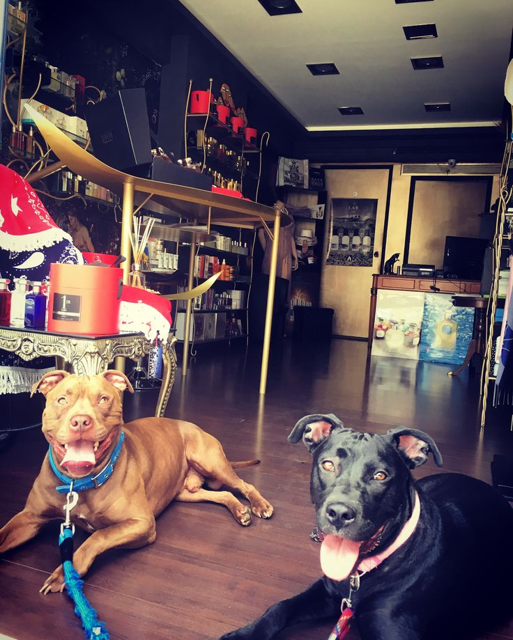 #dogs #best #friends #guards #pitstop at #rosinaperfumery #athens #glyfada #mykonos #puppylove #doglover #dogslove