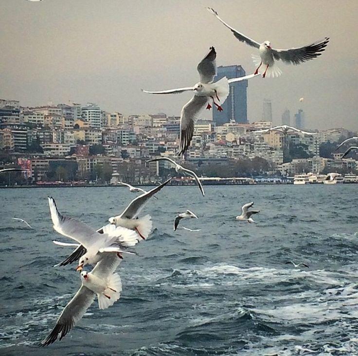 Türkiye Istanbul YaseminAksu