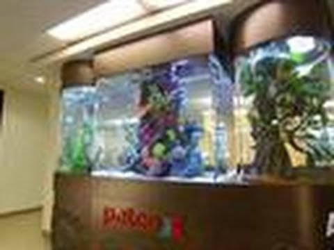 15 best images about get tanked on pinterest the guys for How to make ice in a fish tank